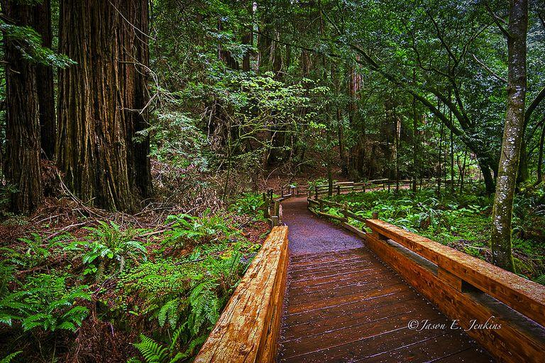 Bosque de plantas