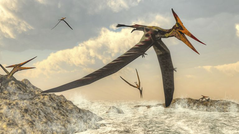 Pteranodon bird flying above ocean.