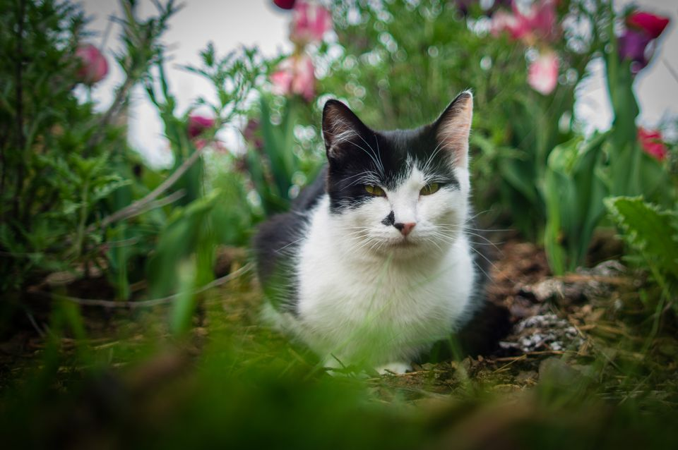 How Do I Keep Cats From Pooping In My Garden