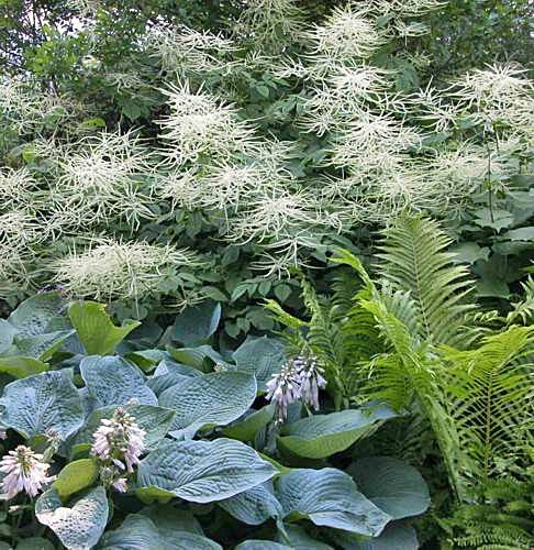 Create a white shade garden with these 8 plants mightylinksfo