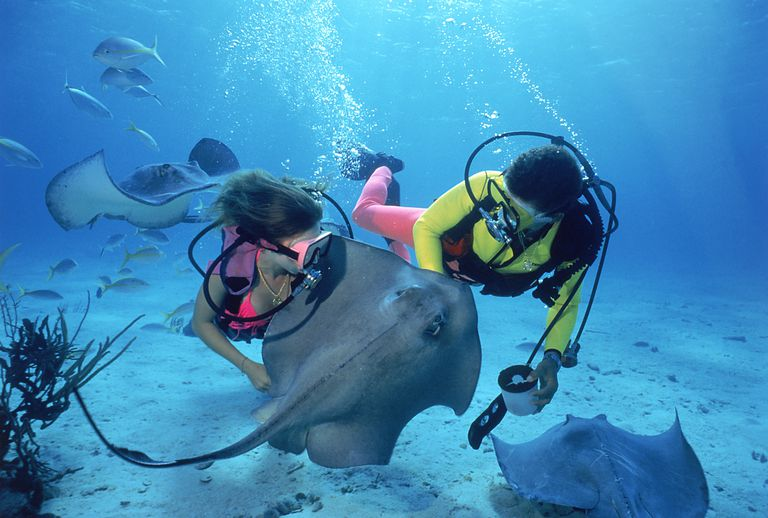 Divers with stingrays under water