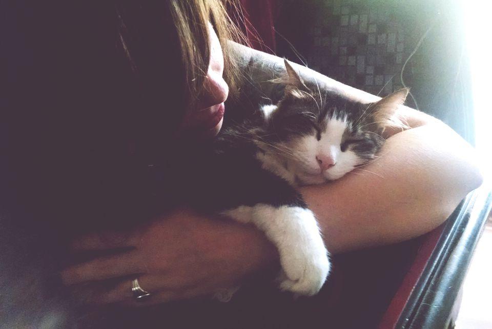Woman Caring Sleepy Cat At Home
