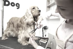 Learn how to become a pet groomer solutioingenieria Images