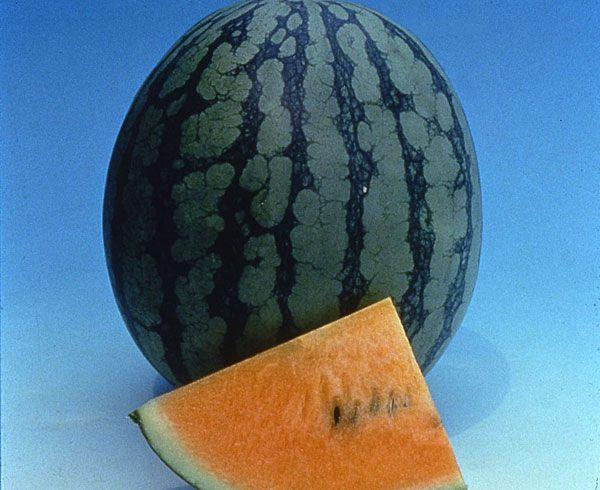 Watermelon New Queen