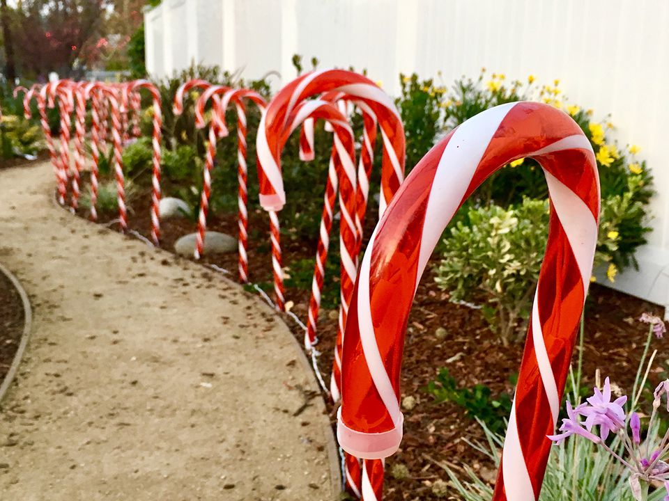 Candy cane lights line a section of unpaved sidewalk in a residential area of Los Angeles for the Christmas holiday season.