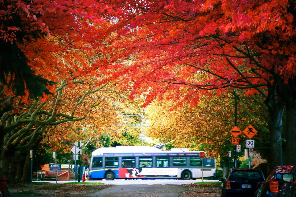 A bus in Vancouver in the autumn
