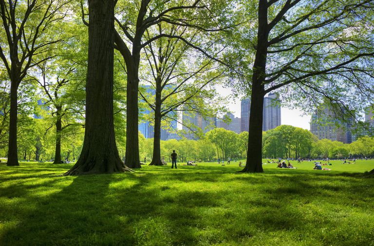 Great lawn in Central Park, New York City