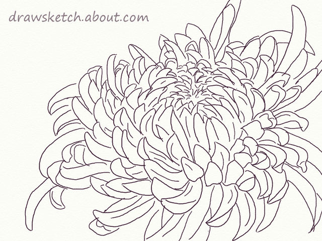 Flower Silhouette Vector additionally Daisy Flowers Tattoo Drawing in addition 213358101066969746 also Basic Flower Drawing Coloring Pages Fancy Basic Flower Drawing Simple Line Drawings Ideas moreover Black Rose Vine 1 80830661. on daisy tattoos