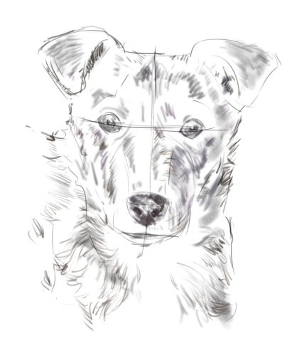 how to shade fur shading the dogs fur