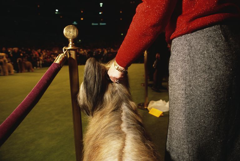 Woman and Dog at Westminster Dog Show
