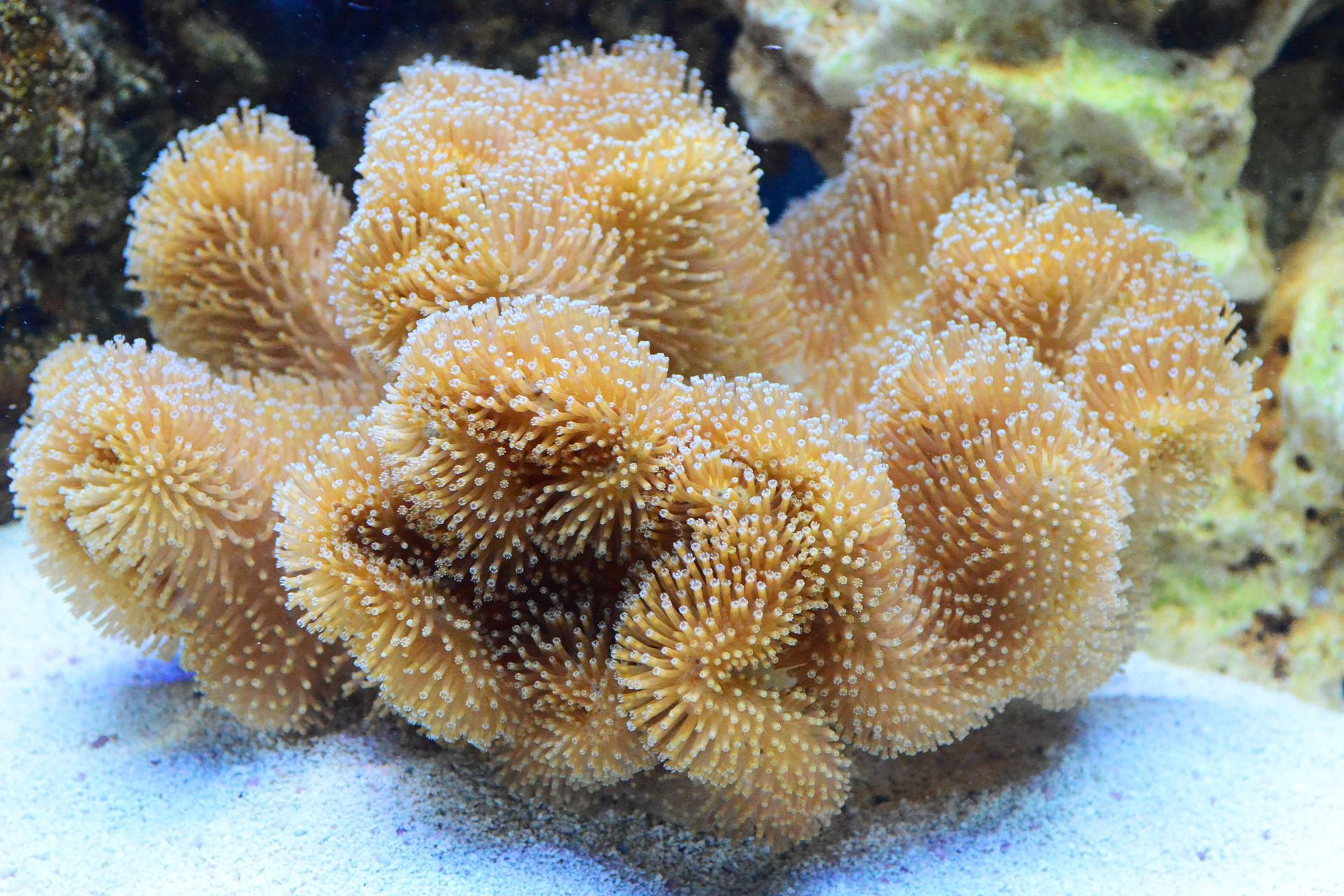 What Do Corals Eat They Need More Than A Lot Of Light