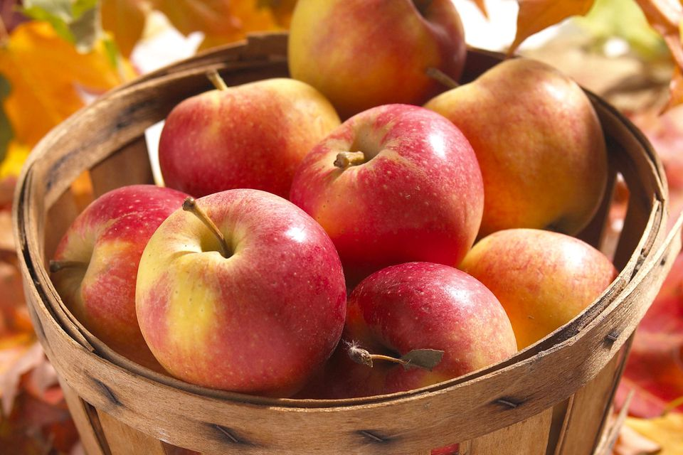 Photo of fall apples