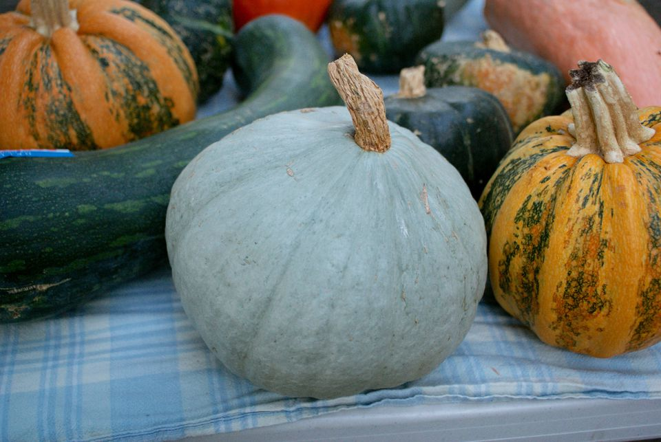15 Winter Squash and Pumpkins Varieties