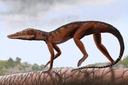 terrestrisuchus