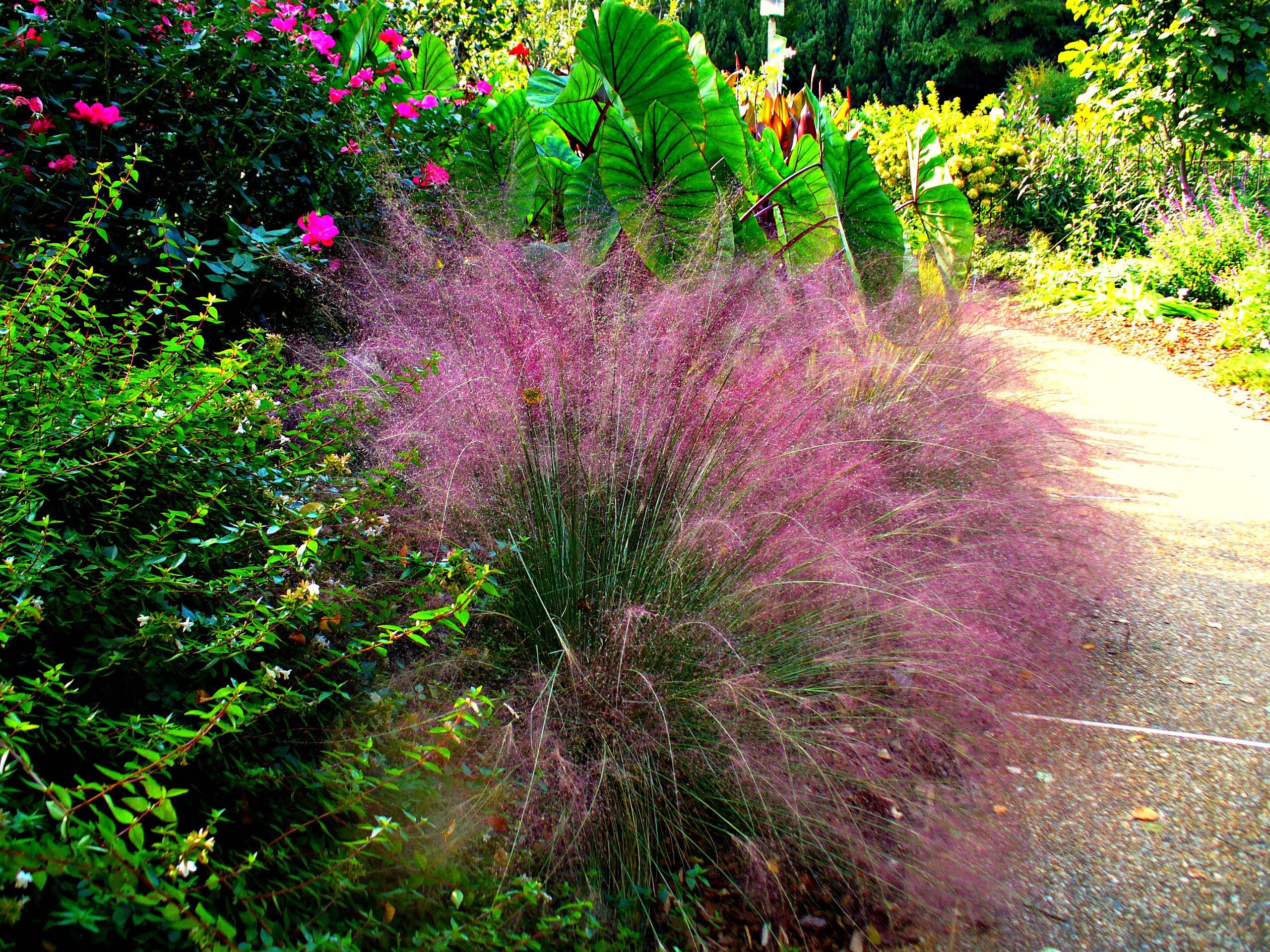 12 ornamental grasses that will stop traffic workwithnaturefo