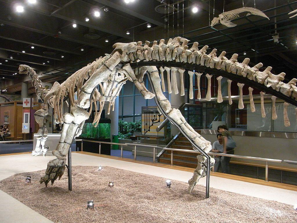 Y Were Dinosaurs So Big Why Were Dinosaurs So ...