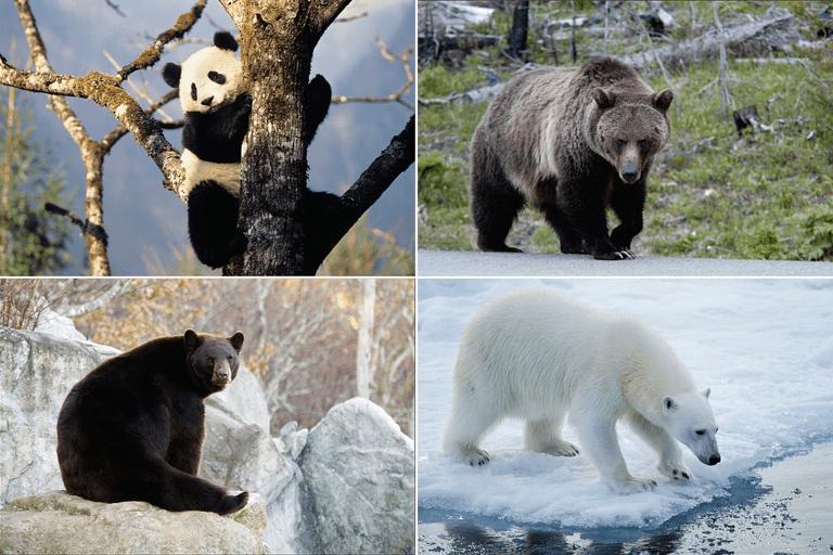 Photos of Bears