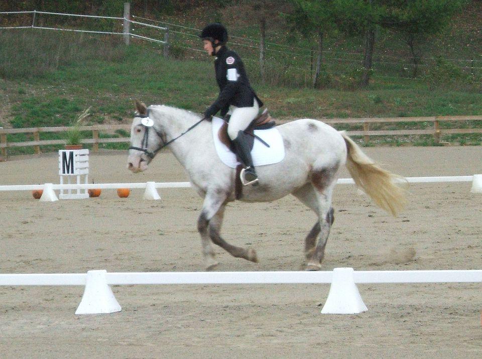 Pony Club dressage rider.