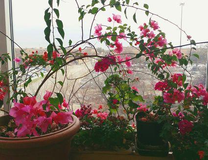 how to help houseplant grow