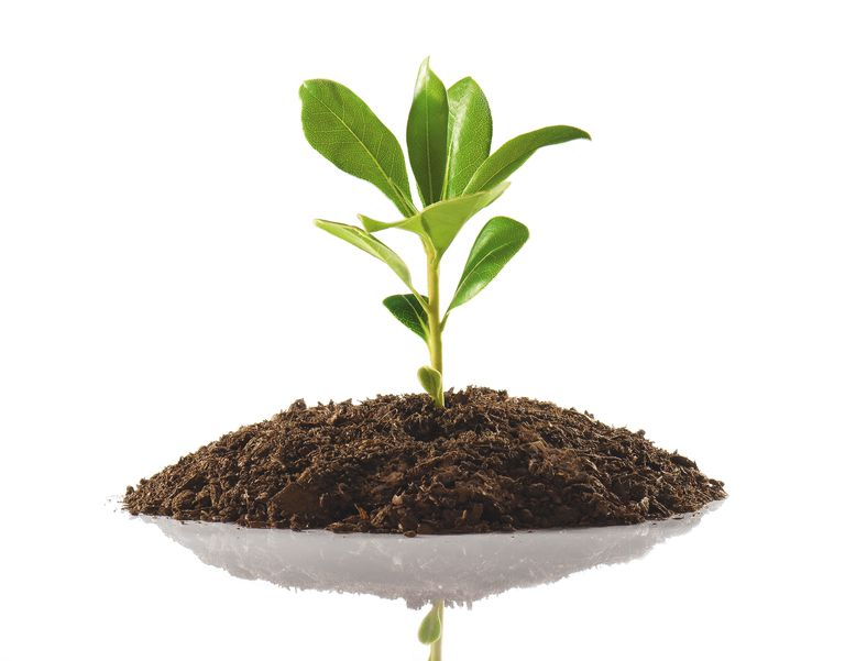 Tierra para tus plantas