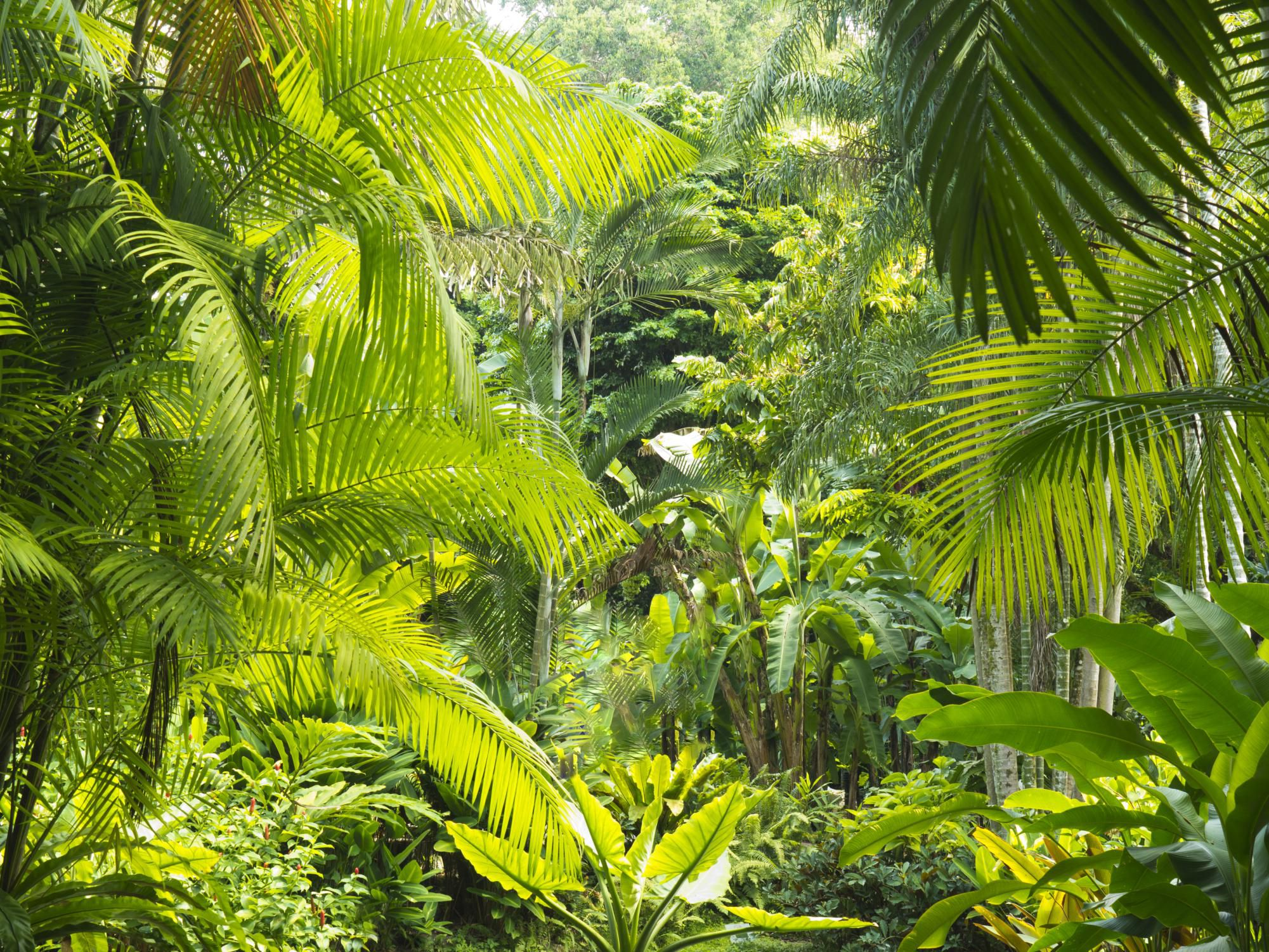 what are rainforests What are the threats to the rainforests before humans started destroying the rainforests, they covered 15% of the earth's land area, today, they cover only 6.