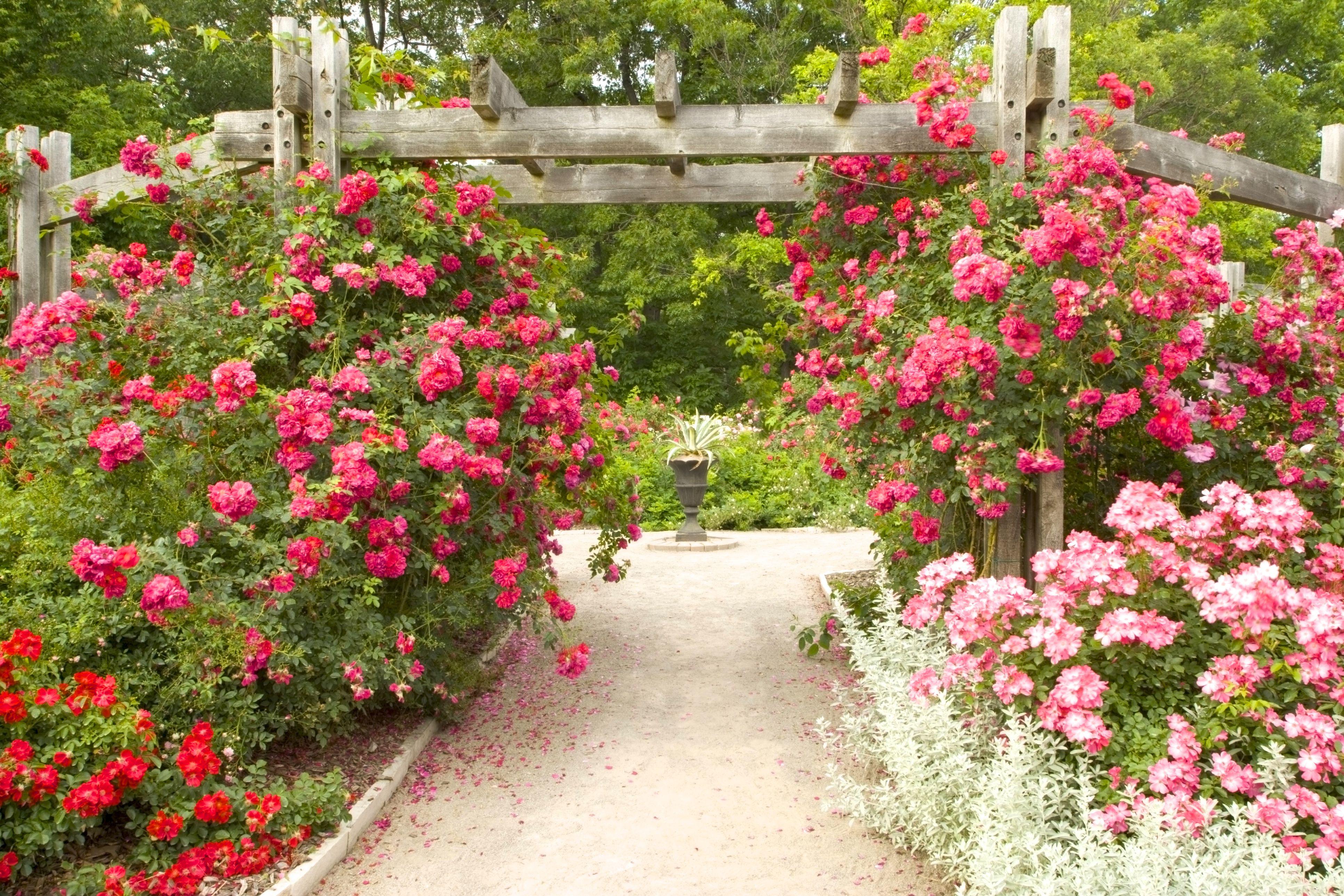 Escoge tu estilo de jard n que va mejor contigo for Jardin 7 colores bernal
