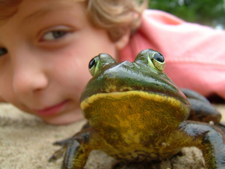Young boy with a toad