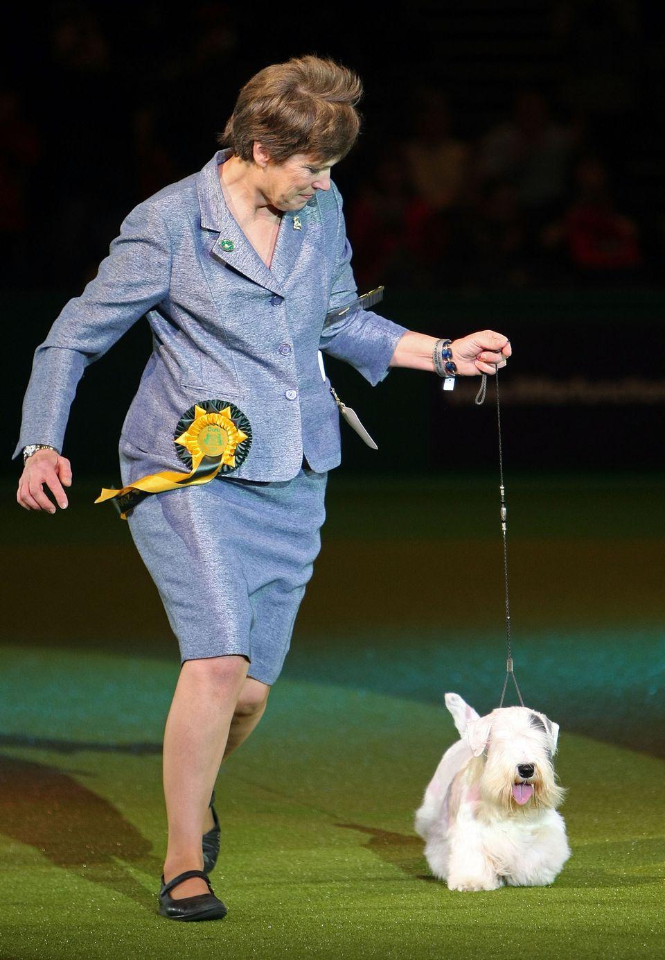 Dog Show Handler
