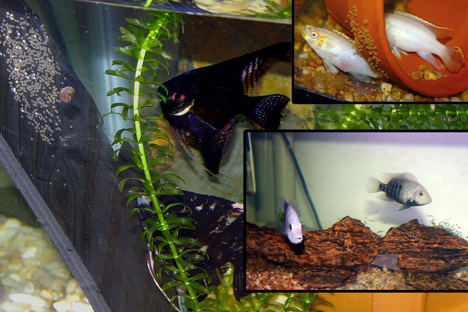 various fish in tanks