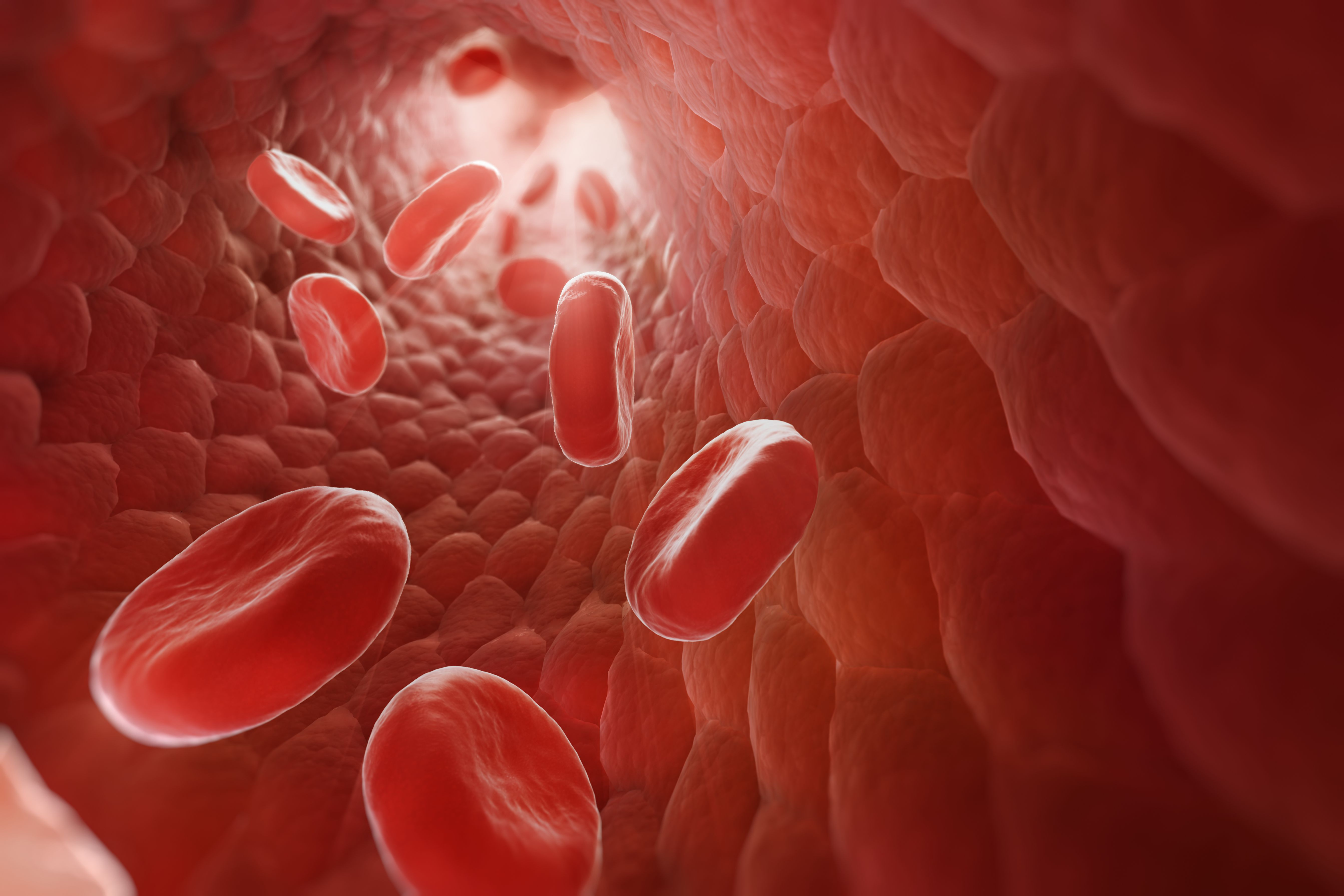 how to build red blood cells in humans