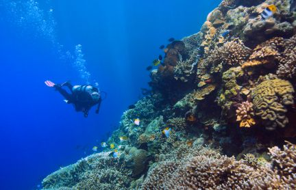 Photo of a scuba diver on a tropical coral reef