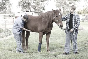 Veterinarian examining the horse