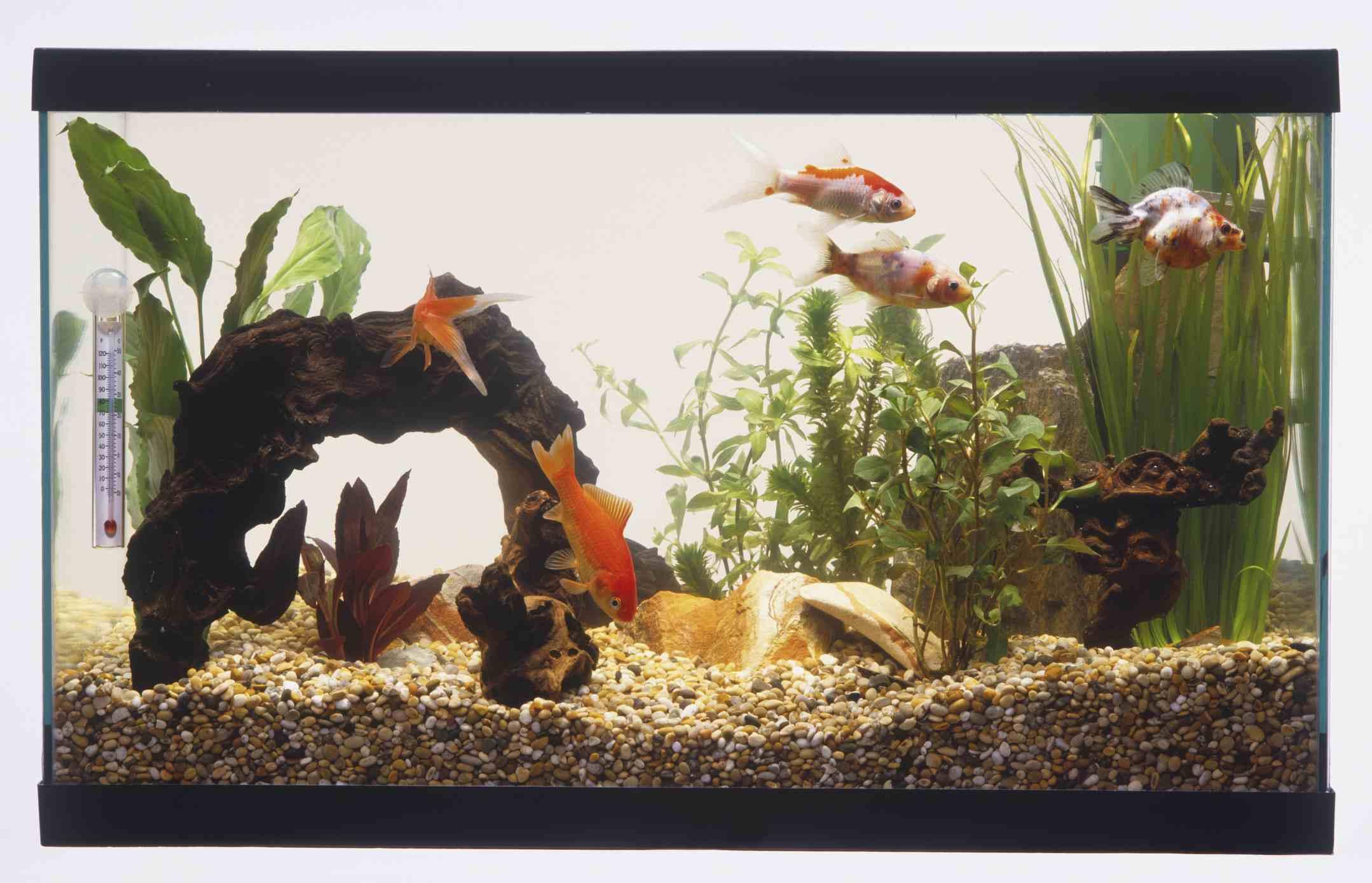 Choosing a Saltwater Aquarium Filtration System