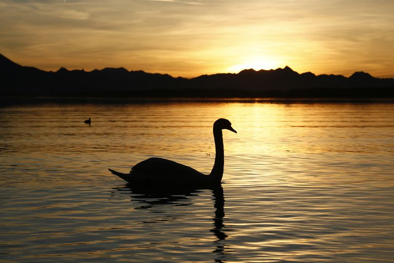 A silhouette of a swan.