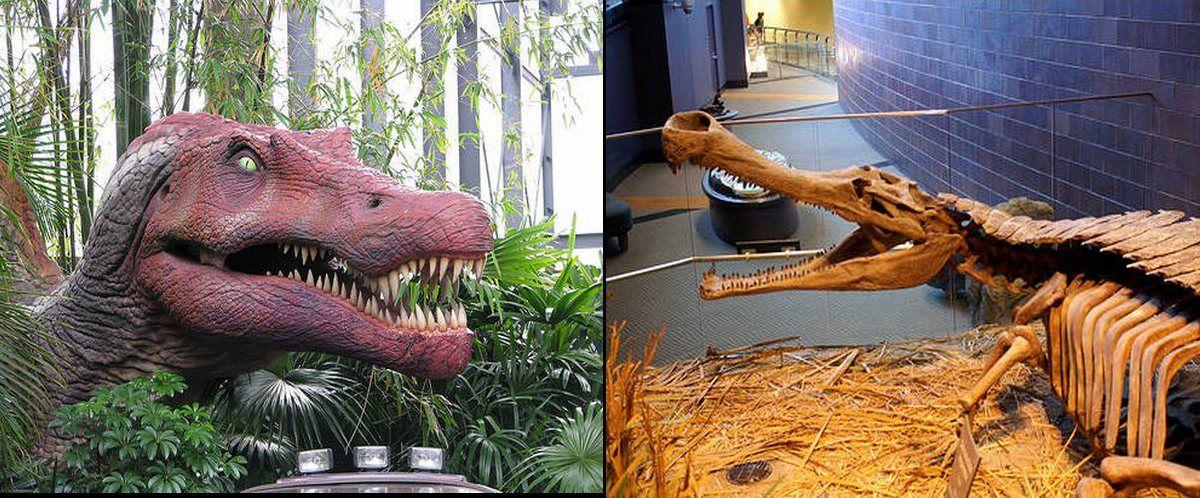 Spinosaurus vs. Sarcos...