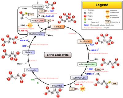 Dna replication why is it important to learn