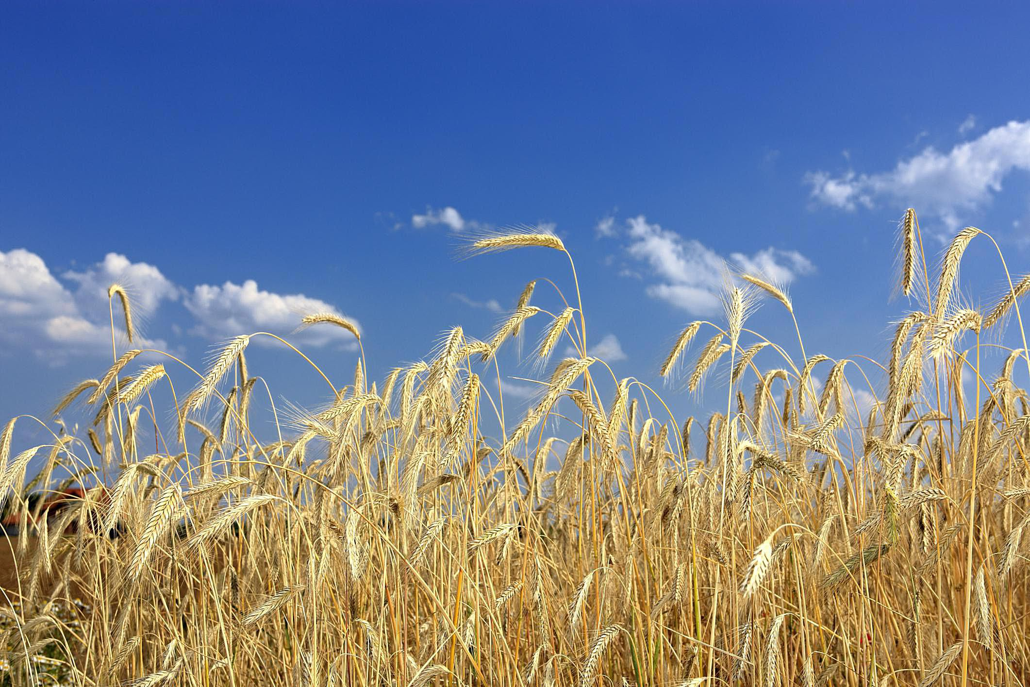 top 5 cover crops for your small farm