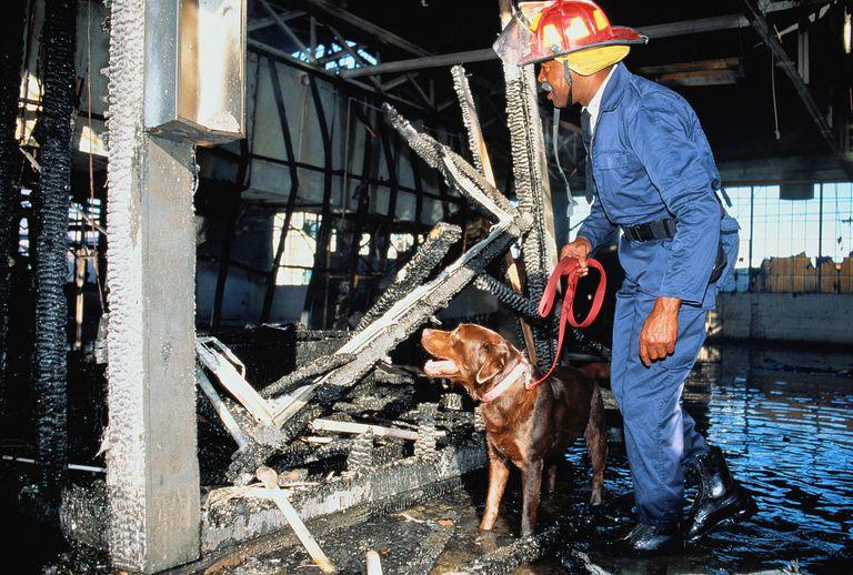 Arson investigator. Fireman investigating fire scene, with dog
