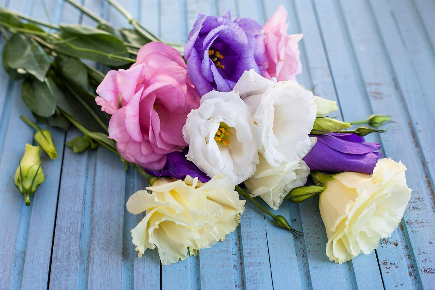 Learn the best flowers for all occasions izmirmasajfo Image collections