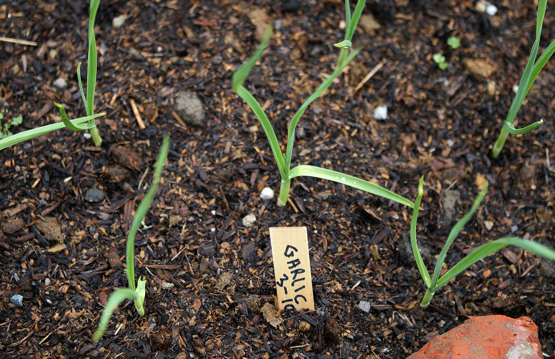 Amending Your Garden Soil to Make It Better
