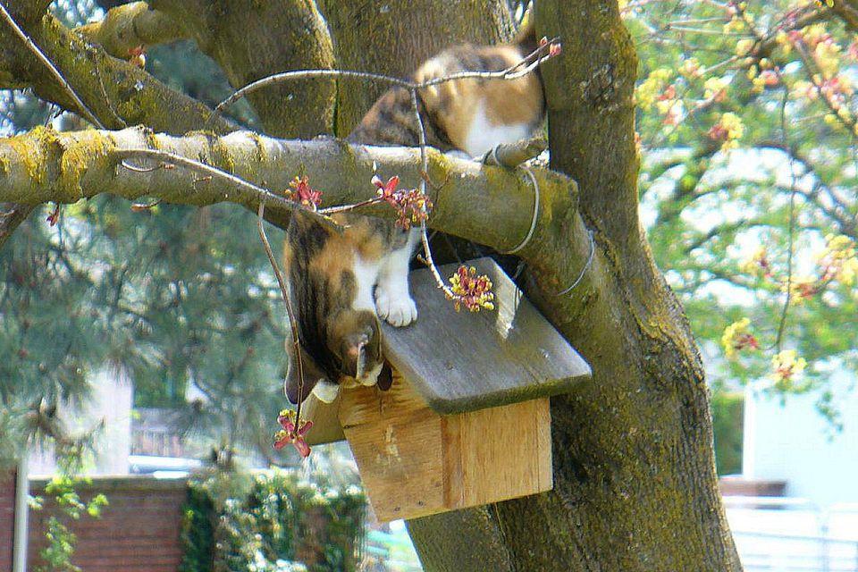 Cat at a Bird House