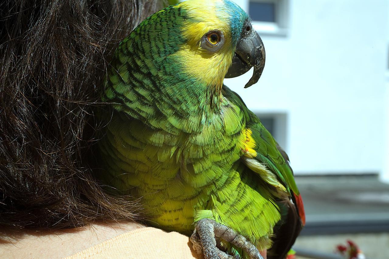 Amazon Parrot Care - Animal World