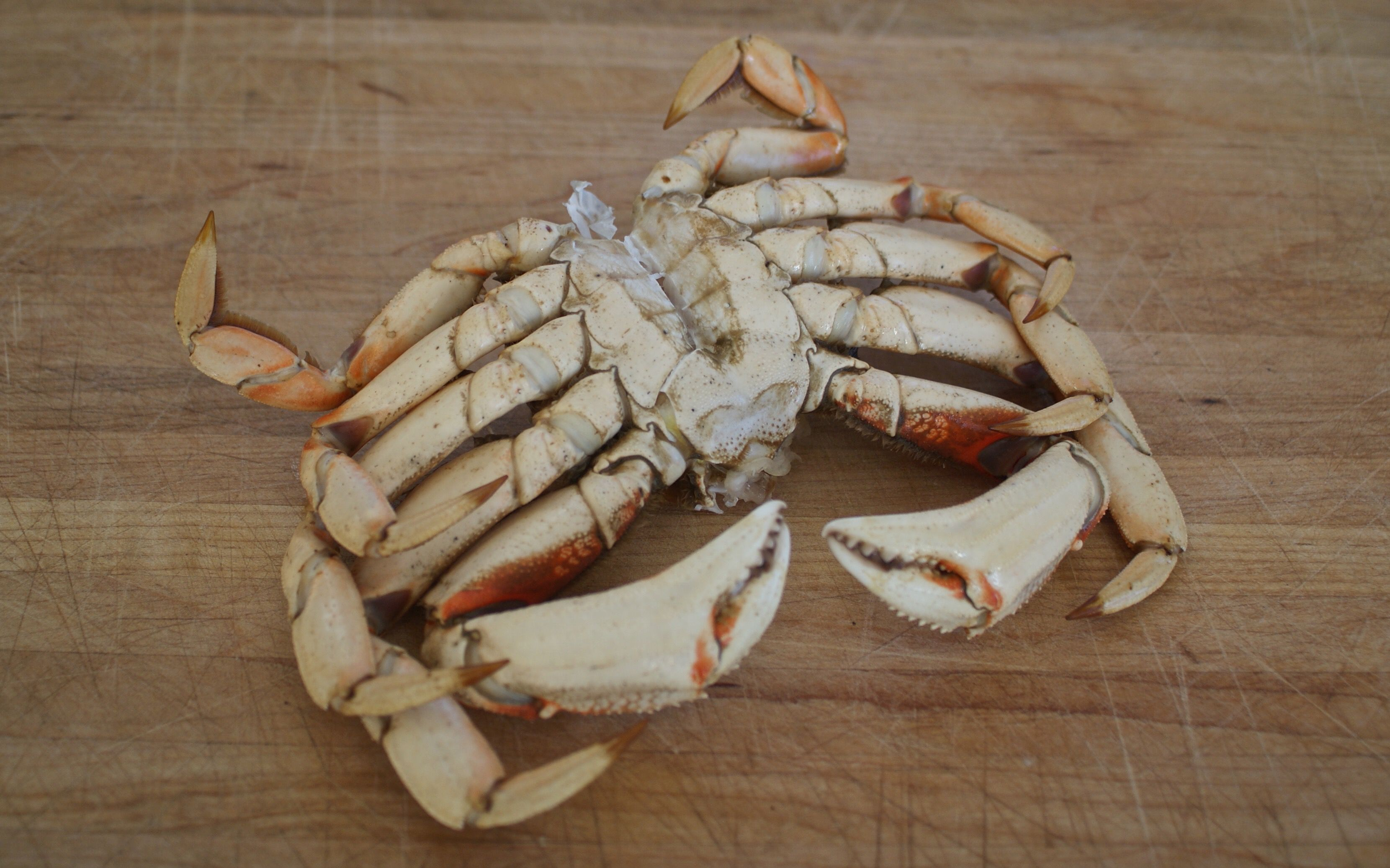 how to clean fresh crabs start with fresh and lively crabs