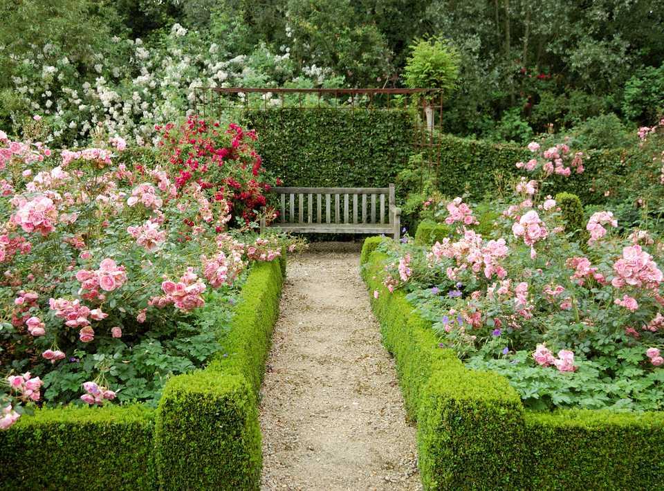 Hedges in a formal garden