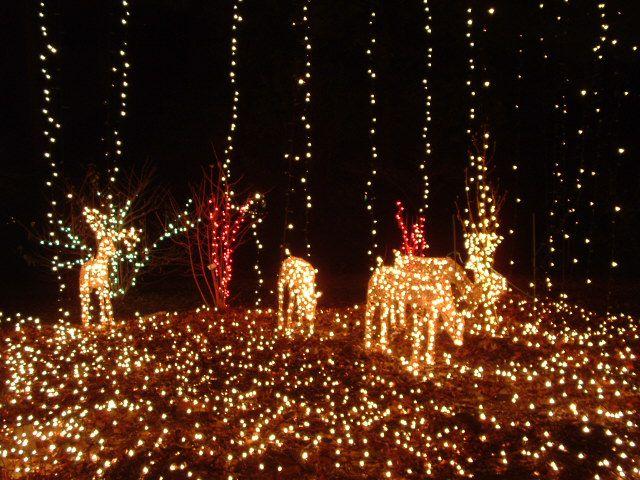 Reindeer at brookside gardens
