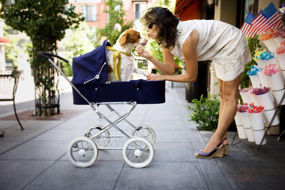 anthropomorphism, dog in stroller