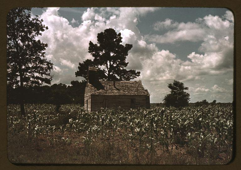 A African American Church In A Corn Field