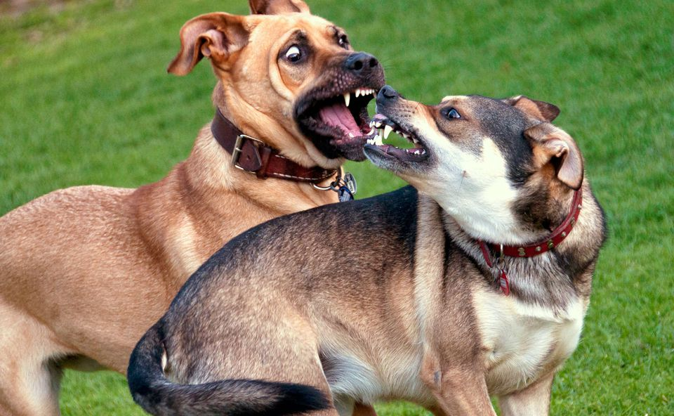 Image result for Dog and Puppy Aggression
