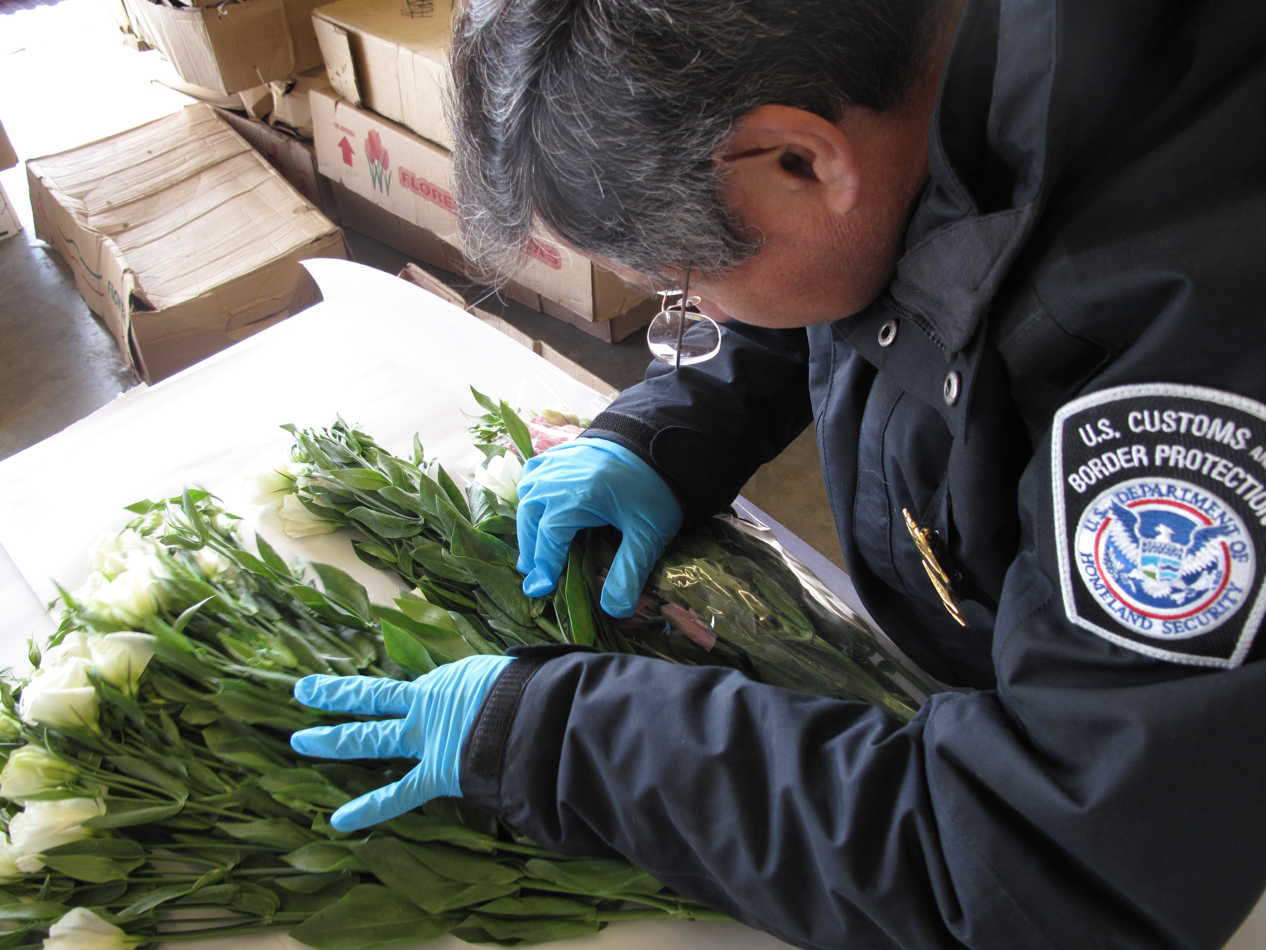 customs and border protection agriculture specialist