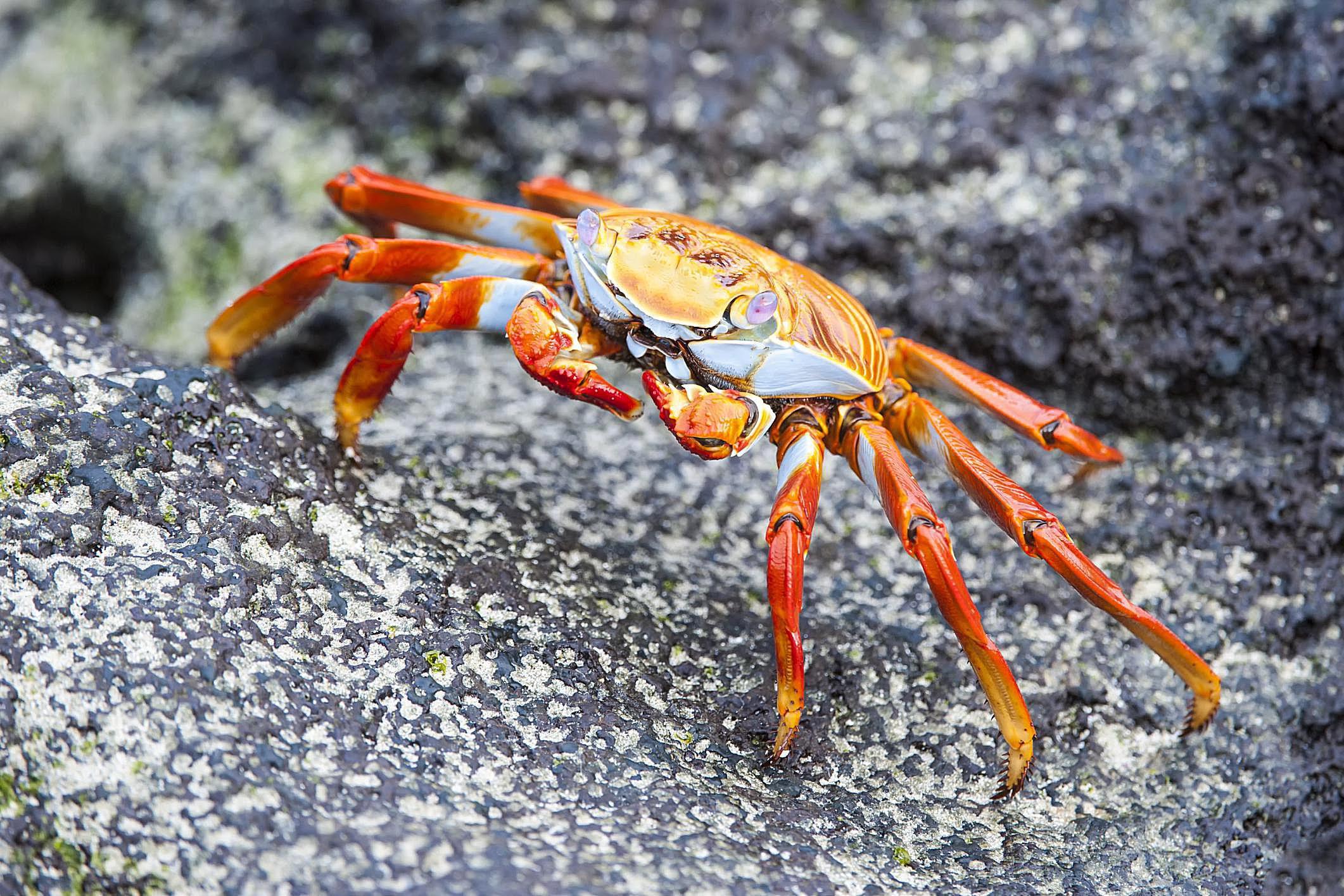 Practical #2 Organisms - Biology 106l with King at ...  |Phylum Arthropoda Marine